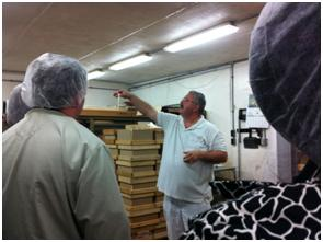 Tasting the cheese for Quality